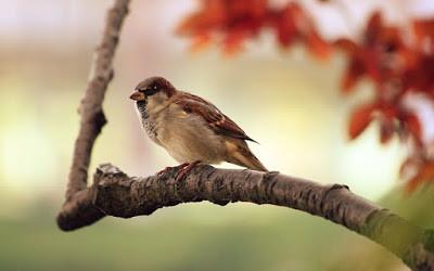 sparrow-9950_640.jpg