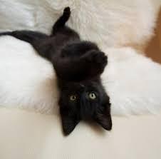 gato 2.jpg
