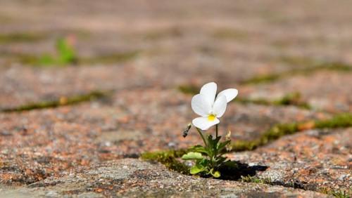 resilient-flower.jpg