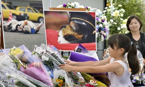 Funeral da Gata Tama
