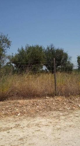 matagal 3.jpg