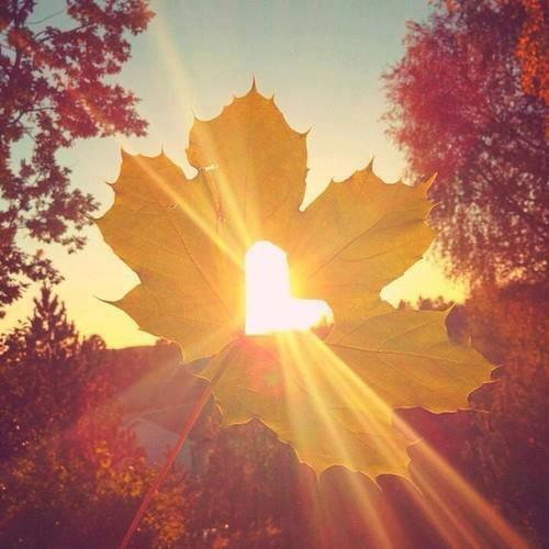 outono_desapego.jpg