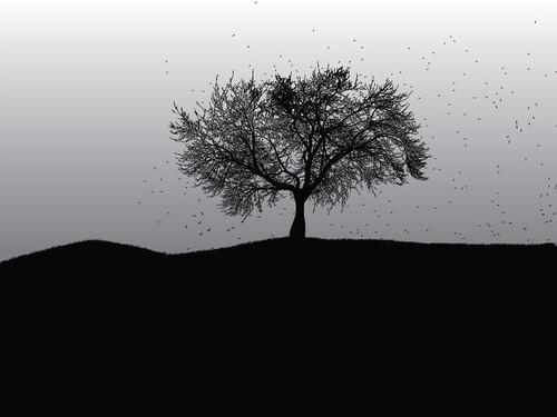 arvore-perdendo-as-folhas-2255d.jpg