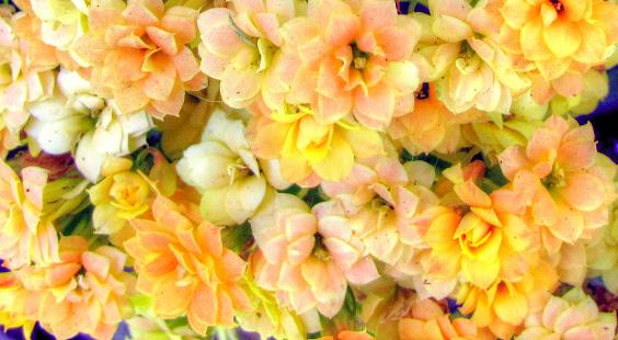 Flores (130)-001_tonemapped.png