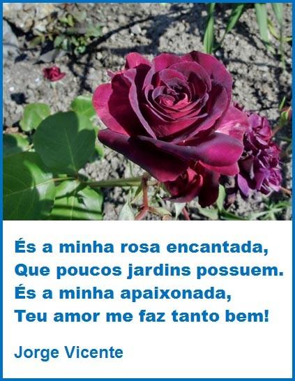 És a minha rosa.jpg