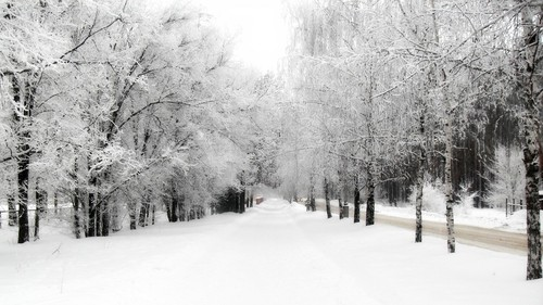 arvores-cobertas-neve.jpg
