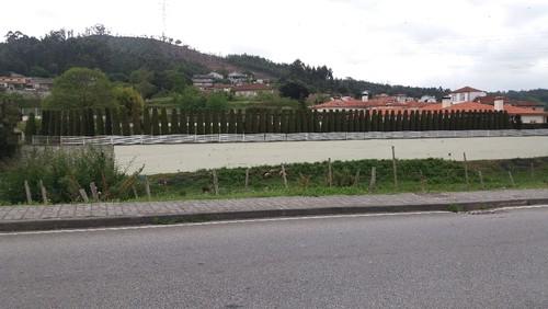 cedros_aparados_rebordosa.jpg