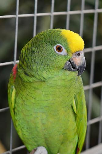 parrot-417967_960_720_2.jpg