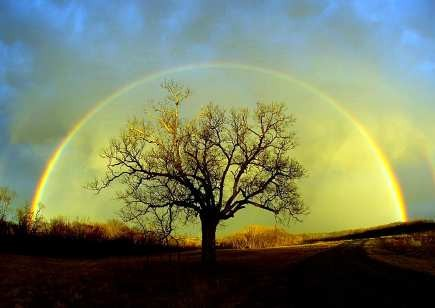 tree_rainbow_435w.jpg