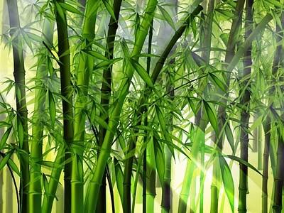 bambu1.jpg