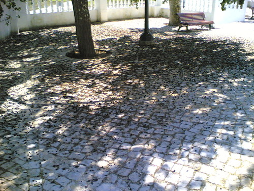 Árvore de amoras: Milhares de amoras no chão