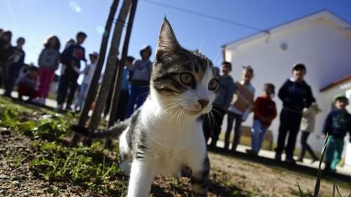 didi-gato1.jpg
