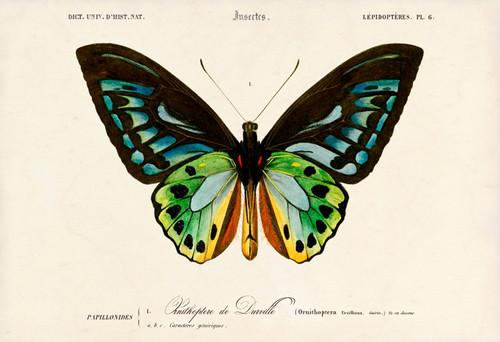 borboleta-2.jpg