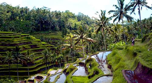 os-melhores-destinos-para-viajar-ubud-indonesia.jp