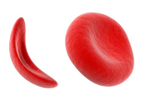 Hemoglobinas_Crédito_Sebastian_Kaulitzki_Shutters