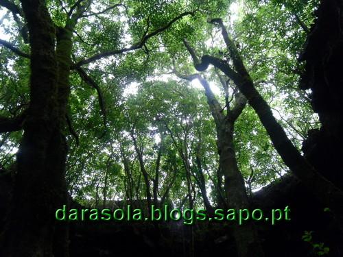 azores_pico_gruta_torres_05.JPG