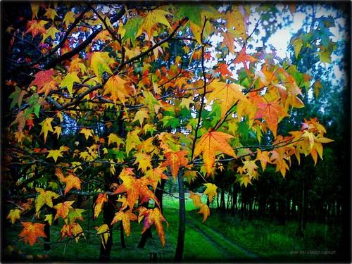 O Outono ainda está LiNDO!, Brejo - São Martinho da Gandara