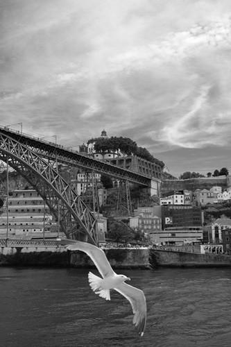 Porto2018_11_500.jpg