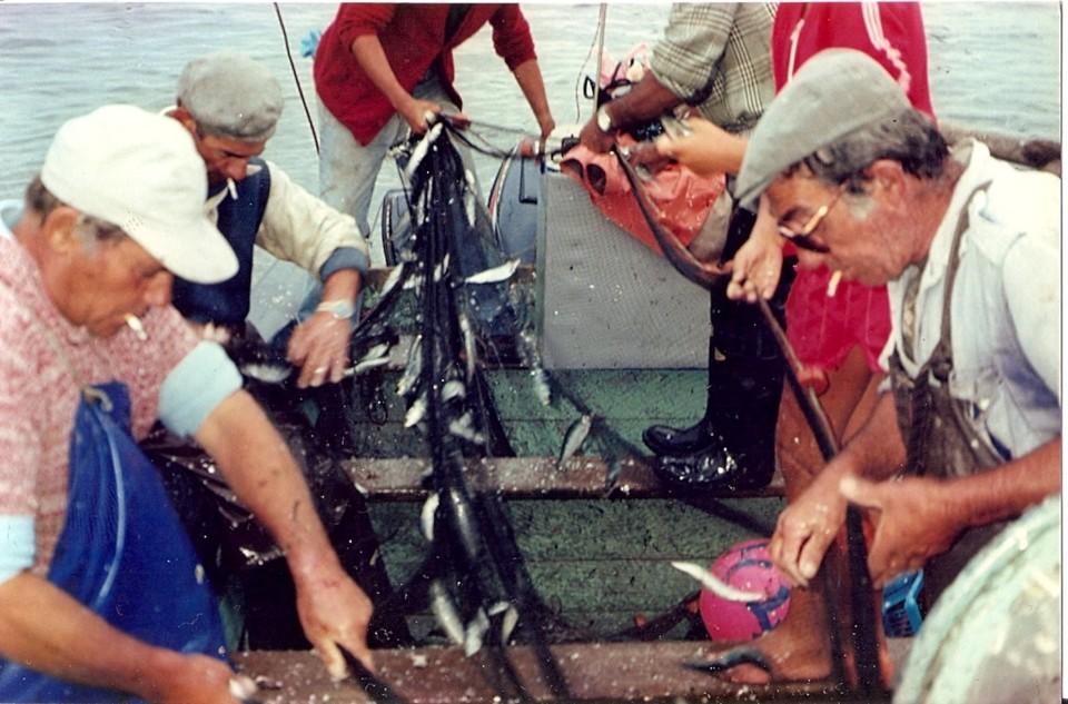 66 - Desmalhando a sardinha.jpg