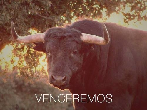 VEMCEREMOS.jpeg