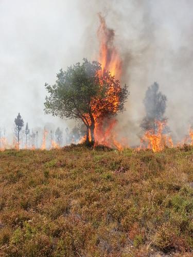 carvalhos ardidos 2.jpg