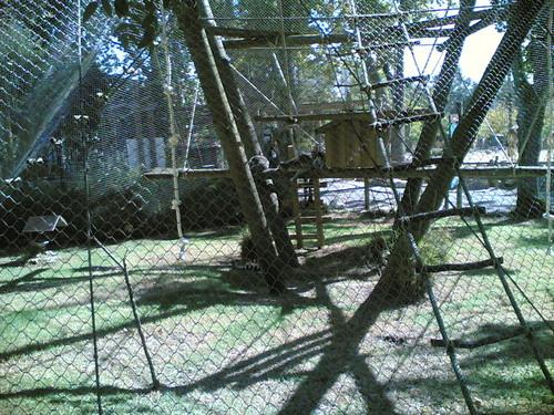 Lémures - Lemurs