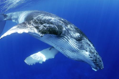 mundo-baleia-20150910-0001-copy.jpg
