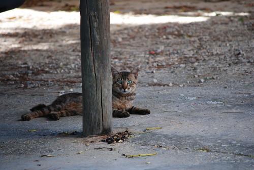 gato espreitando
