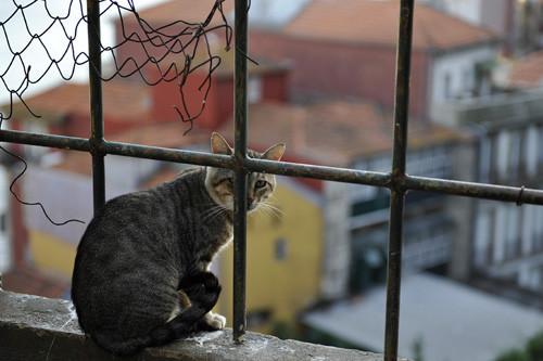 Blogue_gato_Porto2009.jpg