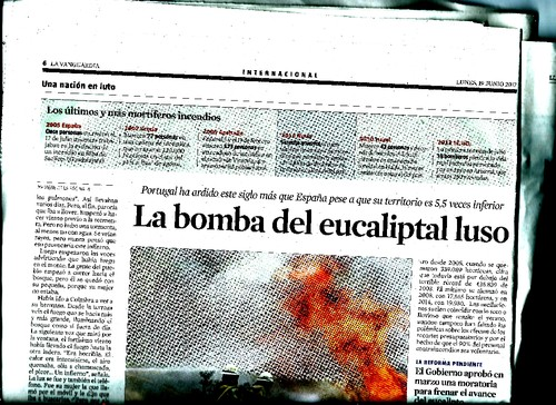 bomba 6.jpg