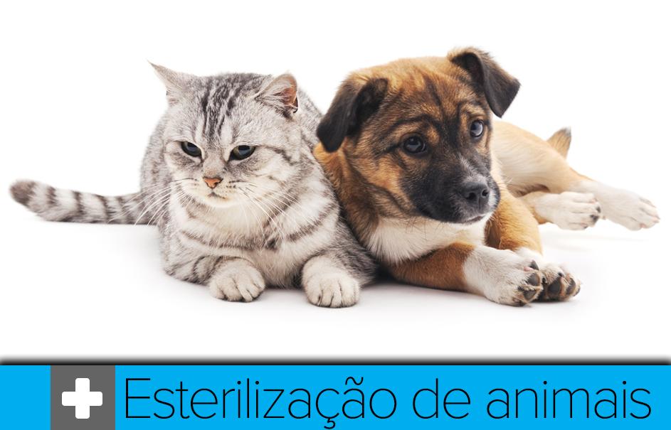 destaque esterilização animais 2019.png