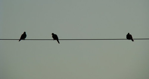 Birds on a Wire by GramMoo (from DeviantArt)