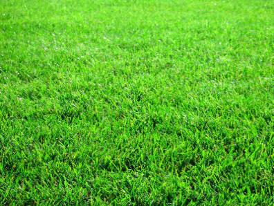 Best Lawn Fertilizer >> Relva de norte a sul do país. - O Ouriço