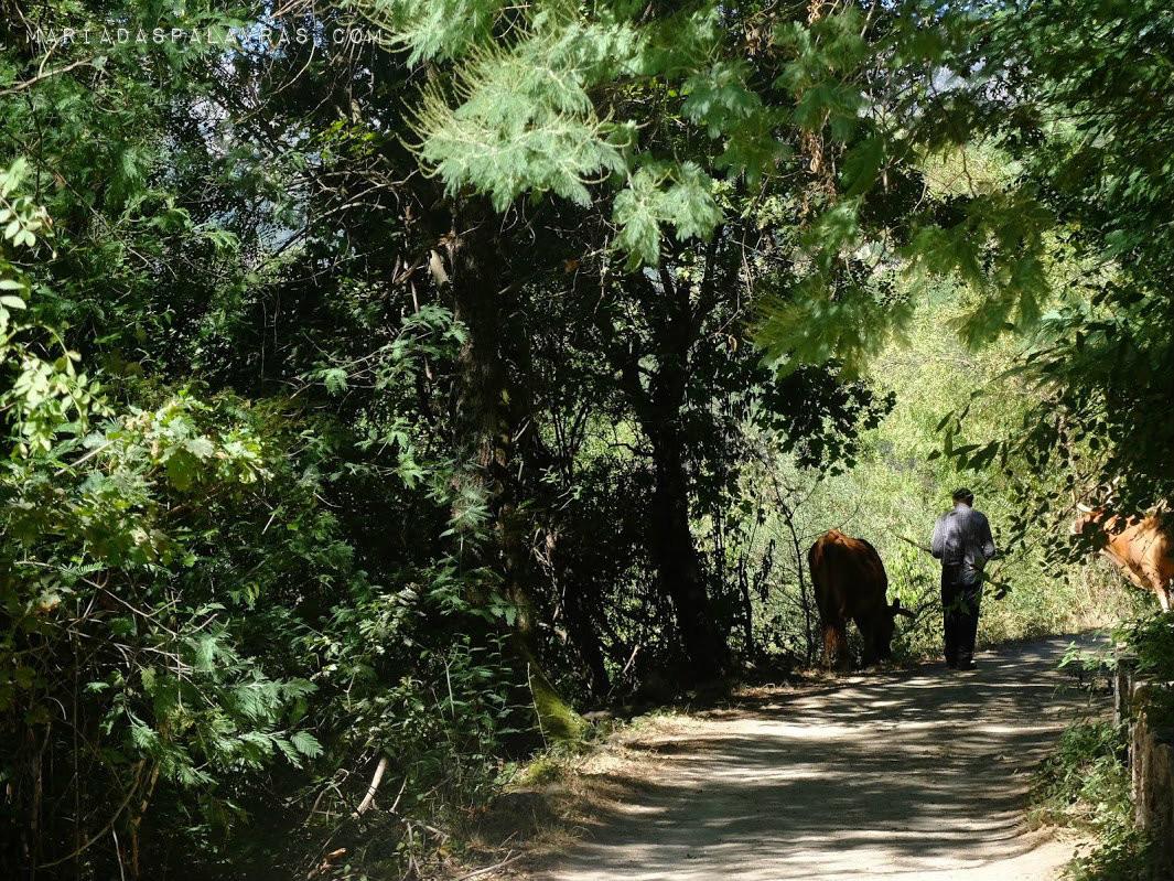 No caminho para a ponte de Misarela - Maria das Palavras