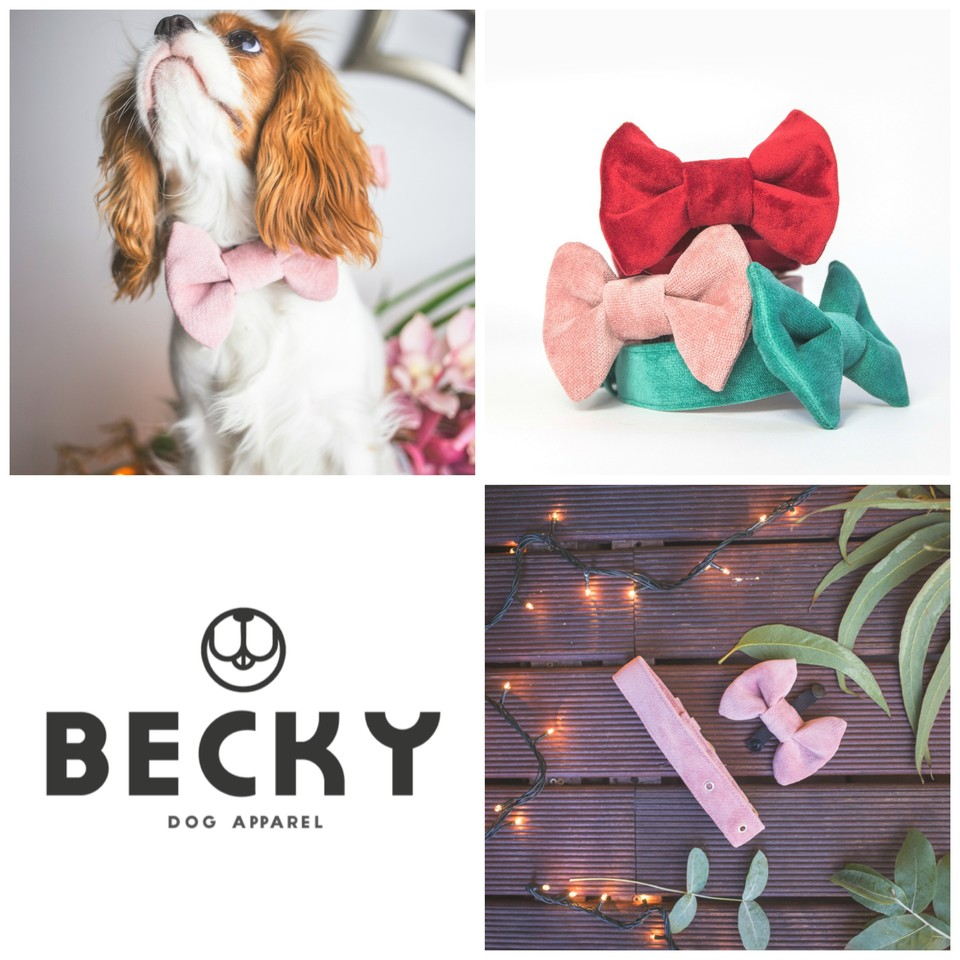 Becky dog_coleira_laco.jpg