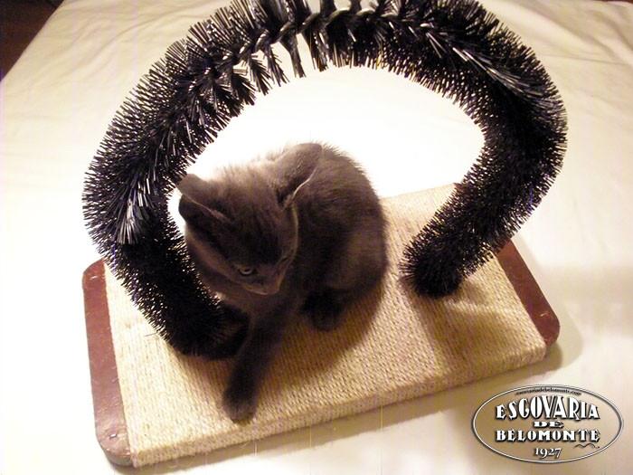 coça-gatos-II.jpg