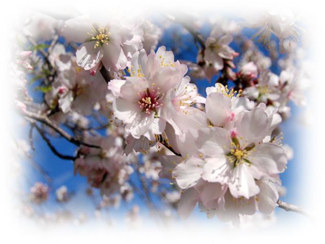 Amendoeiras 6.jpg