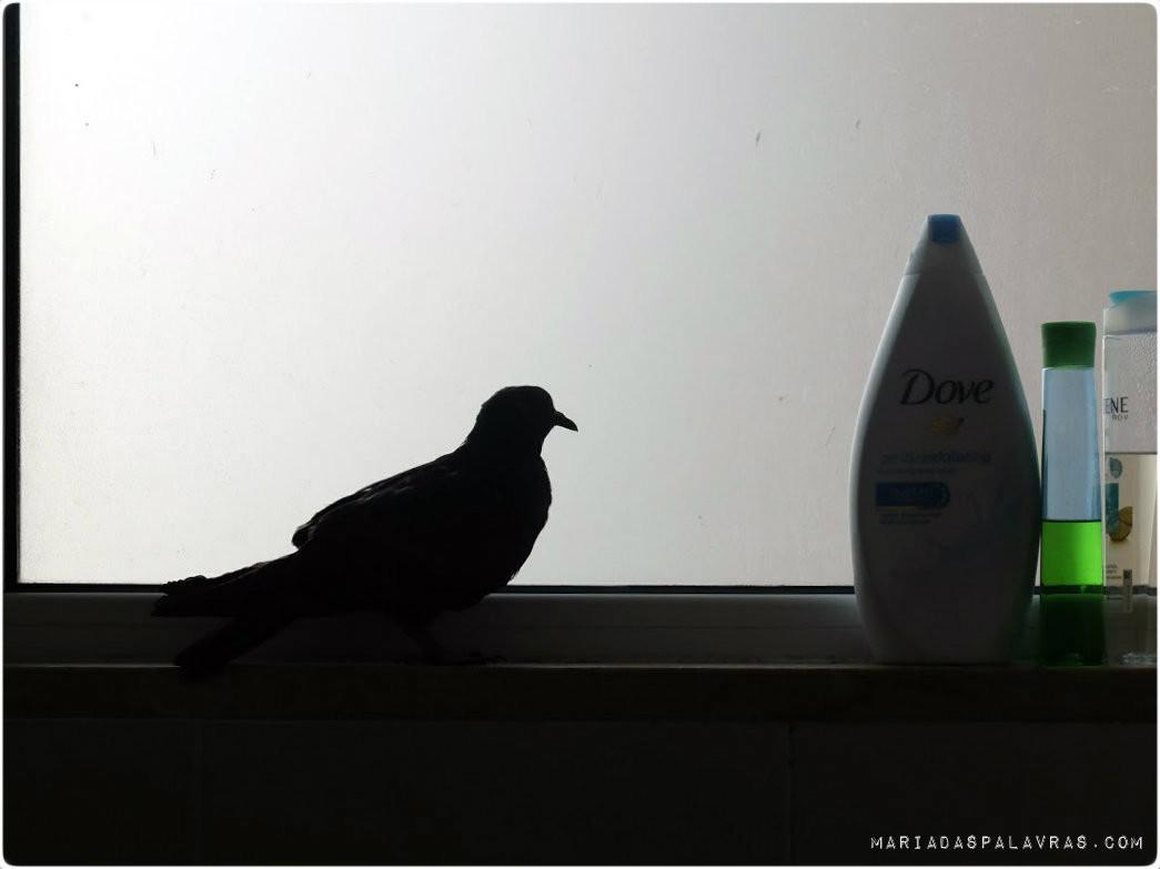 O pombo faz uma tour à casa da Maria das Palavras 3