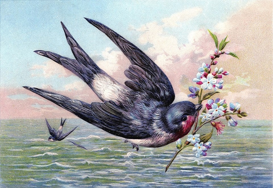 swallow at sea by Karen Watson.jpg