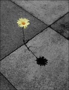 cimento-flor.jpg