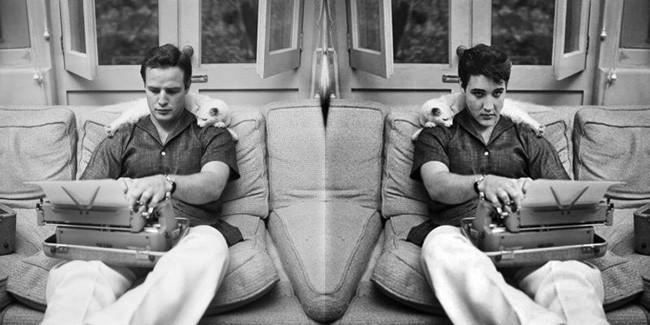 Brando Elvis and the Cat 650px.jpg