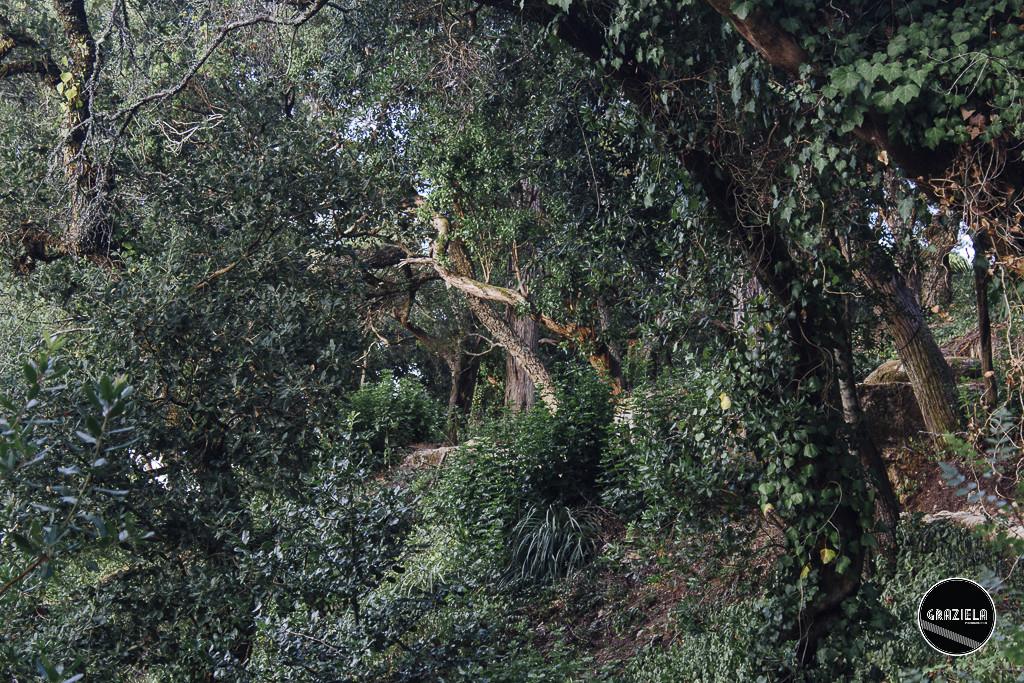 Monserrate-005567.jpg