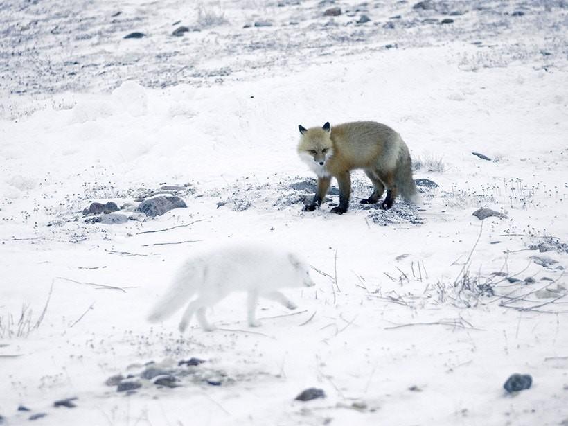arctic%20foc.jpg