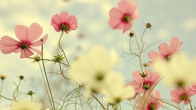 Flor para mãe