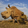 14 WPP Brent Stirton Nature 1st prize stories.jpg