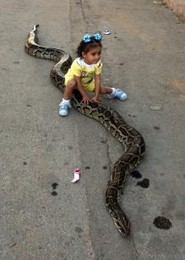 mascota_serpiente