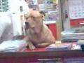 O cão que vende revistas