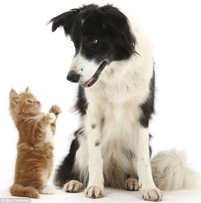 cão gato animais fotos engraçadas