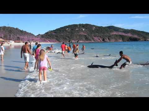 golfinhos brasil