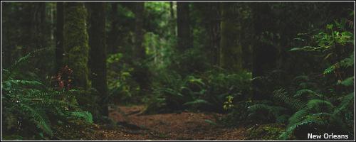 Floresta   15982888_6Ffam